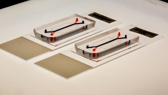 organ on a chip technology