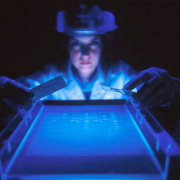 Ethidium bromide (EtBr) is a fluorescent dye commonly used to visualize DNA in agarose gel electrophoresis experiments