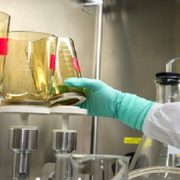 Guidelines for Laboratory and Animal facility staff
